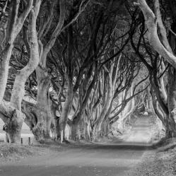 The Dark Hedges, la célèbre route bordée d'arbres torturés, a servi aux tournages d'épisodes de la série Game of Thrones.